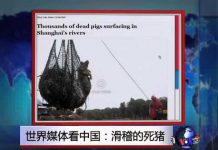 见 世界媒体看中国:滑稽的死猪