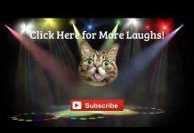 见 猫视频为孩子 – 最好的滑稽猫失败