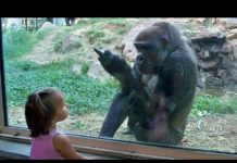 View Kids At The Zoo New Compilation 2016 – Funny Babies At The Zoo