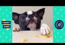 View TRY NOT TO LAUGH – Funny Animals Compilation | Cute Dog Videos | Funny Vines April 2018
