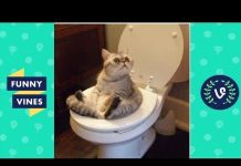 View Funny Cats Compilation 2016  – Best Funny Cat Videos Ever || Funny Vines