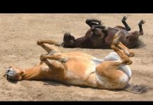 见 滑稽的马 – 一个有趣的马的视频。汇编
