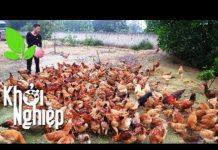 Xem Lần đầu nuôi gà và cái kết đầy may mắn – Khởi nghiệp 291 | SĐTdep.com