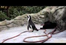 见 滑稽动物园滑稽动物园里的动物