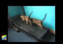View Best Funny Videos Grappige Dieren Compilation 2013 0659