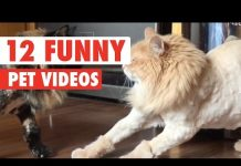 View 12 Funny Pet Videos Compilation 2016