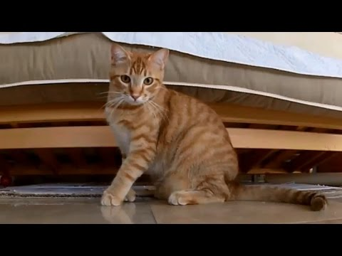 View Funny Cats Compilation 2017