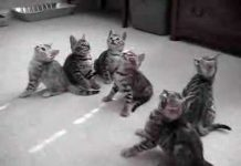 View funny bengal kittens