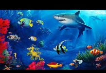 Xem The Best 4K Aquarium for Relaxation 🐠 Sleep Relax Meditation Music – 2 hours – 4K UHD Screensaver