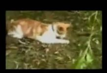 View Funny Cats 3