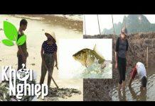 Xem Muốn làm giàu từ nuôi cá chớ quên những kinh nghiệm quý giá này! – Khởi nghiệp 230
