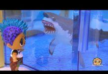 Xem Great White Shark At Aquarium ! LOL Surprise Punk Boi Summer Series Part 5