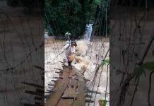 Xem HỘI LÁI XE VIỆT NAM – CLIP HAY NHẤT 2018: vội vã quay về trước khi cây cầu bị nước lũ quấn trôi