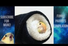 View Funny Parrots and Cute Birds Compilation #65 – 2018