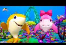 Xem Cá Vàng Bơi Remix ♫ Bé Cá Mập Dễ Thương ♫  Nhạc Thiếu Nhi Sôi Động 2018