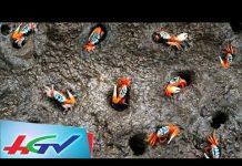 Xem Săn đặc sản còng gió càng đỏ như son ở vùng biển Gò Công | BẢN TIN KINH TẾ NÔNG NGHIỆP – 15/8/2018