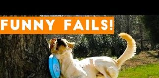 View TRY NOT to LAUGH Animals FUNNY PET FAILS Compilation  2018 | Epic Pet Videos & Moments