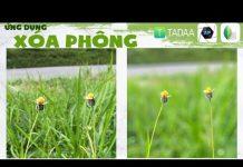 Xem Ứng dụng xóa phông trên điện thoại Android và IOS: Tadaa, AfterFocus, Snapseed quốc dân