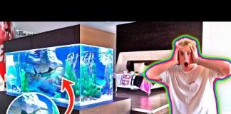 Xem MY NEW BEDROOM SHARK TANK!! **500 GALLONS**