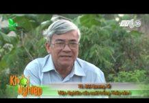 Xem Khởi nghiệp số 116  Nuôi gà thả vườn chỉ với 140 triệu đồng    VTC16