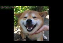 见 非常可爱和滑稽 上帝也疯狂 : 动物从来没能引起哄堂大笑, 外观和笑