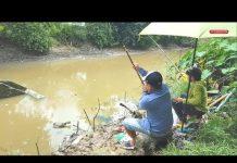 Xem Khám phá điểm câu cá trê đồng cá nheo đồng mới