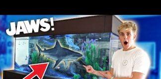 Xem MEET MY NEW GIANT PET SHARK!!