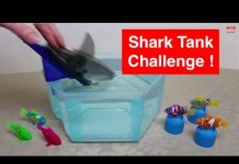 Xem HexBug Aquabot 2.0 – Shark Tank Challenge – Aquabot 2.0 v RoboFish Teams in 5 Survival Rounds