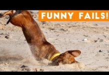 View Funniest Pet Fails Compilation August 2018 | Funny Pet Videos