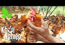 Xem U50 mới khởi nghiệp nuôi gà: Liệu là có muộn? – Khởi nghiệp 365