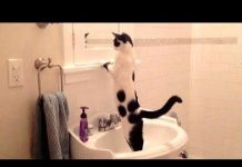 View NOW is TIME TO LAUGH! – Super funny DOGS, CATS & BIRDS