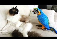 View Try Not To Laugh Challenge – Funny bird videos awesome compilation 2017