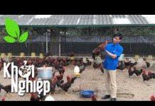 Xem Trại gà thông minh khiến chuyên gia ngỡ ngàng  – Khởi nghiệp 370