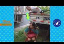 View Funny Videos ● Best of Chinese Funny Videos Whatsapp Funny Videos 2017( Part 10)