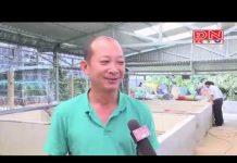 Xem Tạo nền tảng để nông dân khởi nghiệp thành công