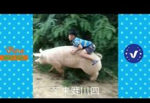 View Funny Videos 2017 ● People doing stupid things P50
