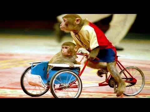 Xem Con khỉ – Nhạc thiếu nhi remix vui nhộn cho bé