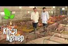 Xem Giá lợn vừa tăng trở lại: Nông hộ khởi nghiệp từ chăn nuôi lợn giờ ra sao? – Khởi nghiệp 344