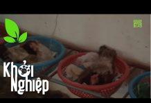 Xem Dùng rổ làm ổ đẻ cho gà: Rẻ mà chất – Khởi nghiệp 350