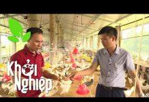 Xem Sai lầm nghiêm trọng làm chết rất nhiều gà – Khởi nghiệp 361