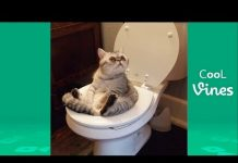 View Try Not To Laugh Challenge – Funny Cat & Dog Vines compilation 2017