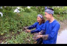 Điểm đến: Trải nghiệm du lịch cộng đồng tại Cồn Sơn