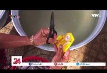 Công nghệ chế biến cá khô dùng hóa chất độc hại – Tin Tức VTV24