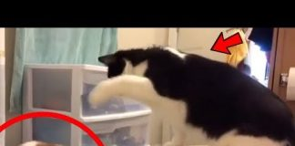 View CATS vs DOGS Funny COMPILATION !