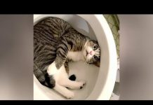 View I SWEAR you will CRY WITH LAUGHTER! – Ultra FUNNY PETS & ANIMALS