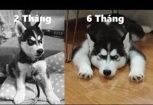 Xem Nếu bạn cười bạn thua thách thức nhịn cười với chó hài hước – Try not to laugh dog videos