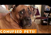 View Funniest Confused Pets Compilation 2018 | Funny Pet Videos