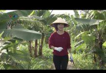 Xem Thái Bình: Triệu phú ở tuổi 23 với 900 triệu/năm