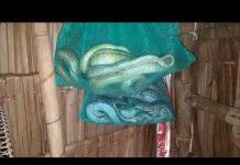 Xem Bẫy rắn lần đầu khởi nghiệp nha…