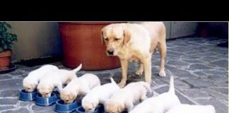 View 'Dogs compilation': funny videos